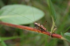 Grasshopper cat walk royalty free stock photo