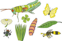 Grasshopper, caterpillar, butterfly, fly, wasp, le. Various insects in vectorial illustrations Vector Illustration