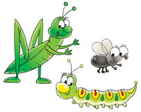 Grasshopper, caterpillar and fly Stock Photography