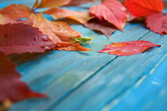 Grasshopper in colorful autumn leaves Stock Photos