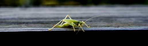 Grasshopper. Cool contrast shot of a grasshopper on my cabin windowsill in Chamonix, France Stock Photos