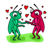 Grasshopper couple love Royalty Free Stock Image