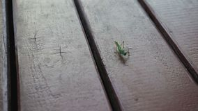 Grasshopper crawling on the floor stock video