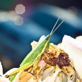 Grasshopper feeding the rose in blue background Stock Photos