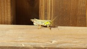 Grasshopper. On a fence Royalty Free Stock Photos