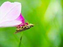 Grasshopper on a flower Stock Image