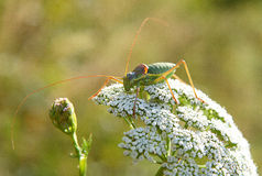 Grasshopper on the flowers stock photos