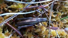 grasshopper Foto da un telefono cellulare fotografia stock