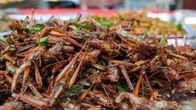 Grasshopper fried Stock Photo