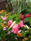 Grasshopper+garden royaltyfri bild