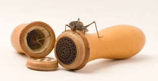 Grasshopper and gourd stock photos