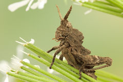 Grasshopper in the grass Stock Photography