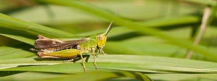 A grasshopper on the grass Stock Photos