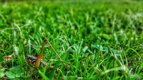 Grasshopper in the grass stock photo