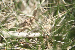 Grasshopper in grass Stock Photo