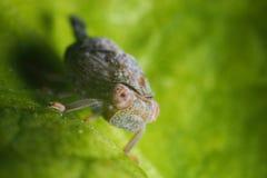 Grasshopper. Green grasshopper ready to escape Stock Photography