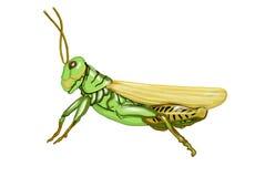 Grasshopper Illustration. Illustration of a green grasshopper royalty free illustration