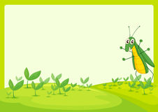 A grasshopper Royalty Free Stock Photos