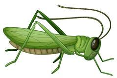 A grasshopper vector illustration