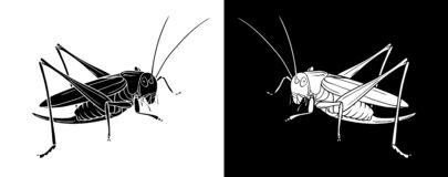 Grasshopper. Insect with flat design and line art black and white version stock illustration