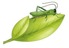 A grasshopper and a leaf Stock Image