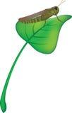 Grasshopper on leaf Royalty Free Stock Image