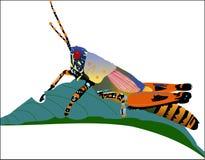 Grasshopper on leaf. Colorful Grasshopper on green leaf stock illustration