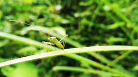 A grasshopper stock photography