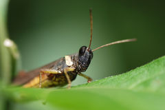 Grasshopper living on the leaf Stock Photos