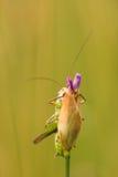 Grasshopper look Stock Photos