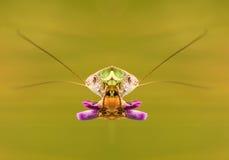 Grasshopper look Stock Photo
