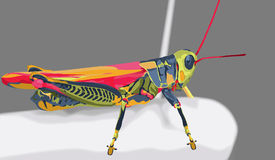 Grasshopper. Of many colors using a specific color pallet. green, pink, yellow and blue. illustrated using shapes to highlight light and dark areas Stock Photos