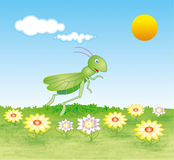 Grasshopper on a meadow Royalty Free Stock Images