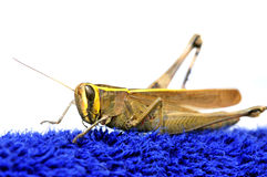 Grasshopper model Stock Images