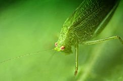 Free Grasshopper On A Leaf Stock Photography - 16940232