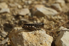 Grasshopper. Over the rock in the wood stock photos