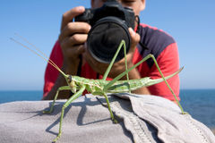 Grasshopper and photographer Royalty Free Stock Photos
