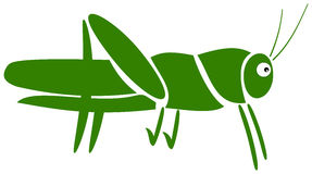 A grasshopper pictogram. Green illustration Stock Image