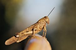 Grasshopper profile. Grasshopper on the balcony in front of the garden Stock Images