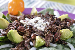 Grasshopper salad Stock Images