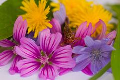Grasshopper sits on bouquet of colorful flowers. Grasshopper sits on a bouquet of colorful flowers Royalty Free Stock Images