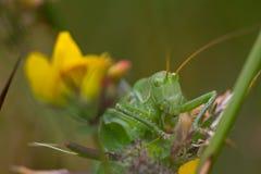 Grasshopper sits on plant Stock Photo