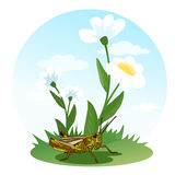 Grasshopper sitting on a flower field. Life of insects. Children's illustration. Vector Royalty Free Stock Photo
