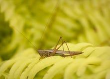 Grasshopper Stock Photos
