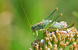 The grasshopper sitting on the plant Stock Image