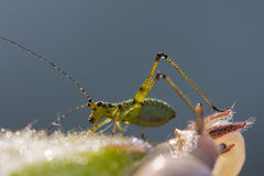 The grasshopper and snail Royalty Free Stock Photo