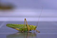 Grasshopper to photovoltaic panel Royalty Free Stock Photos