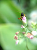 Grasshopper. On top of pink flower Royalty Free Stock Photos