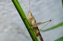 Grasshopper in tree stock photos