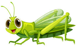 Free Grasshopper With Happy Face Royalty Free Stock Images - 91626979